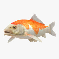 3D harivake koi fish model