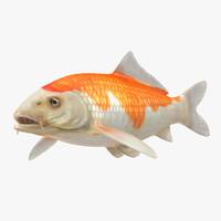 3D harivake koi fish model
