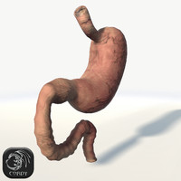 Stomach full and a half low poly