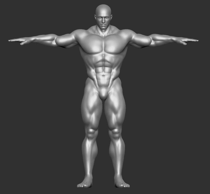 male muscle buff 3D