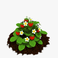 strawberry plants model