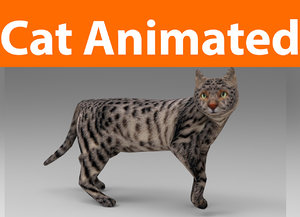 3D model cat animations