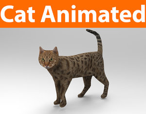 3D cat animations