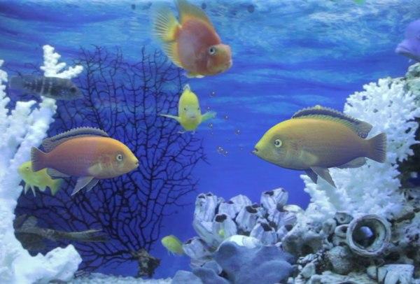 fishes talks 3D model