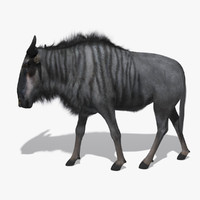 wildebeest fur animation 3D