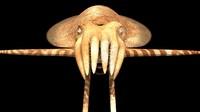 cuttlefish 3D model