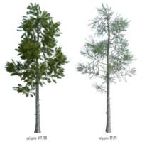 3D pine t model