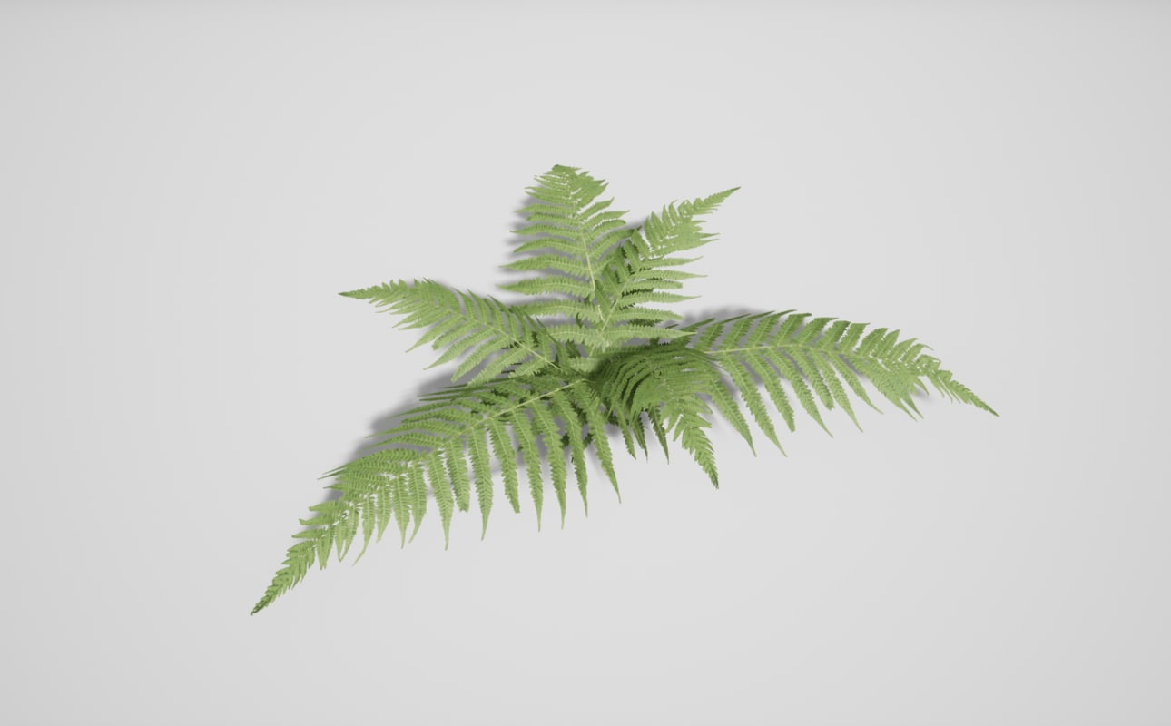 resolution fern 3D model