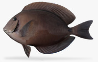 doctorfish fish 3D