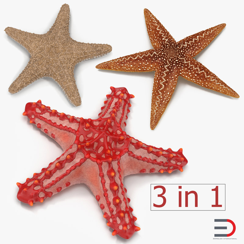 starfishes 2 3D model