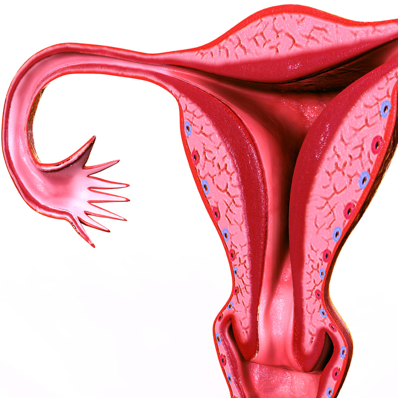 3D female reproductive