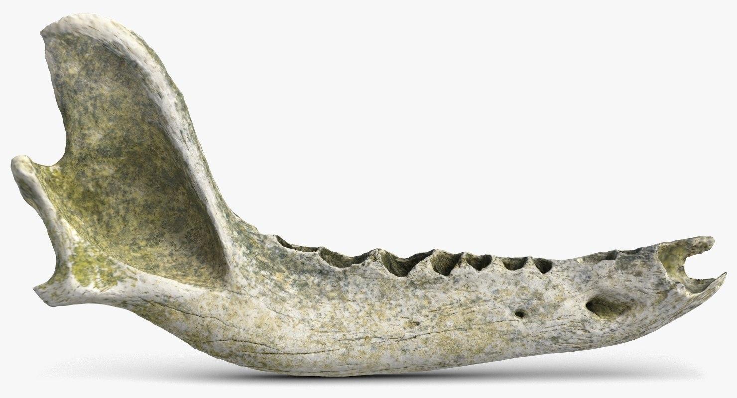 3D old dog jaw bone model