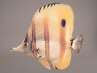 3D wall fish model