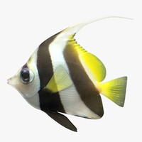 bannerfish fish 3D model