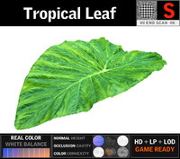 3D tropical leaf