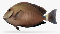 3D model doctorfish fish