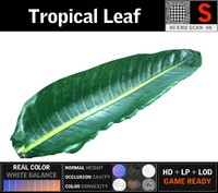 3D tropical leaf model