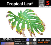 tropical leaf 3D