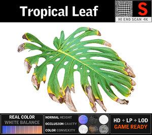 tropical leaf 3D