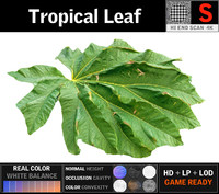 3D model tropical leaf