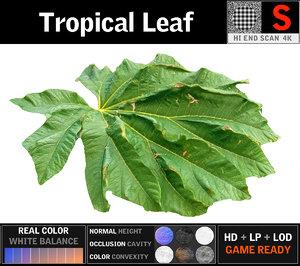 3D model tropical leaf