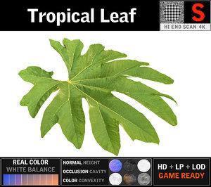 3D tropical leaf model