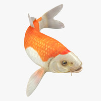 3D harivake koi fish swiming
