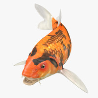 3D koi fish rigged