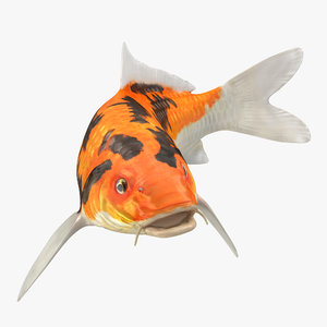 3D model koi fish swiming pose