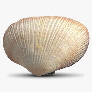 3D model sea shell 20