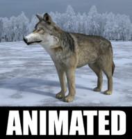 gray wolf 3D