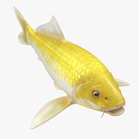 Yellow Koi Ogon Fish