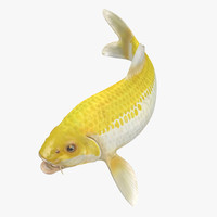 3D model yellow koi ogon fish