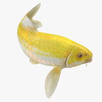 3D yellow koi ogon fish