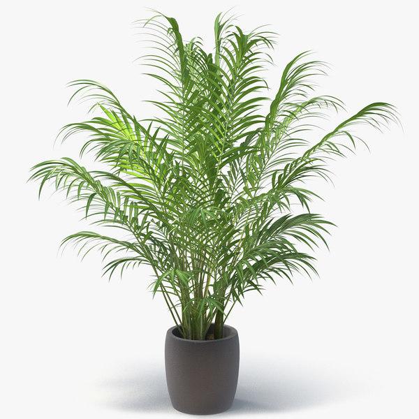 areca palm model