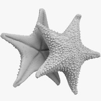 StarFish Statue(high & low poly)