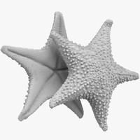3D starfish stl model