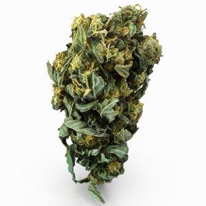cannabis bud model