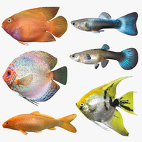 freshwater fish set scanline 3D