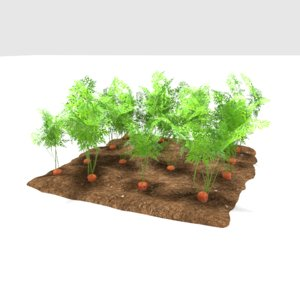 carrots 3 growth stages 3D model