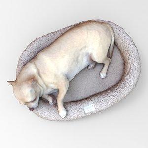 3D dog basket