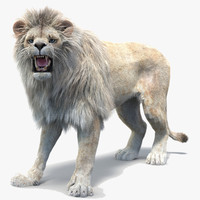 Lion 2 (White, Fur, Rigged)