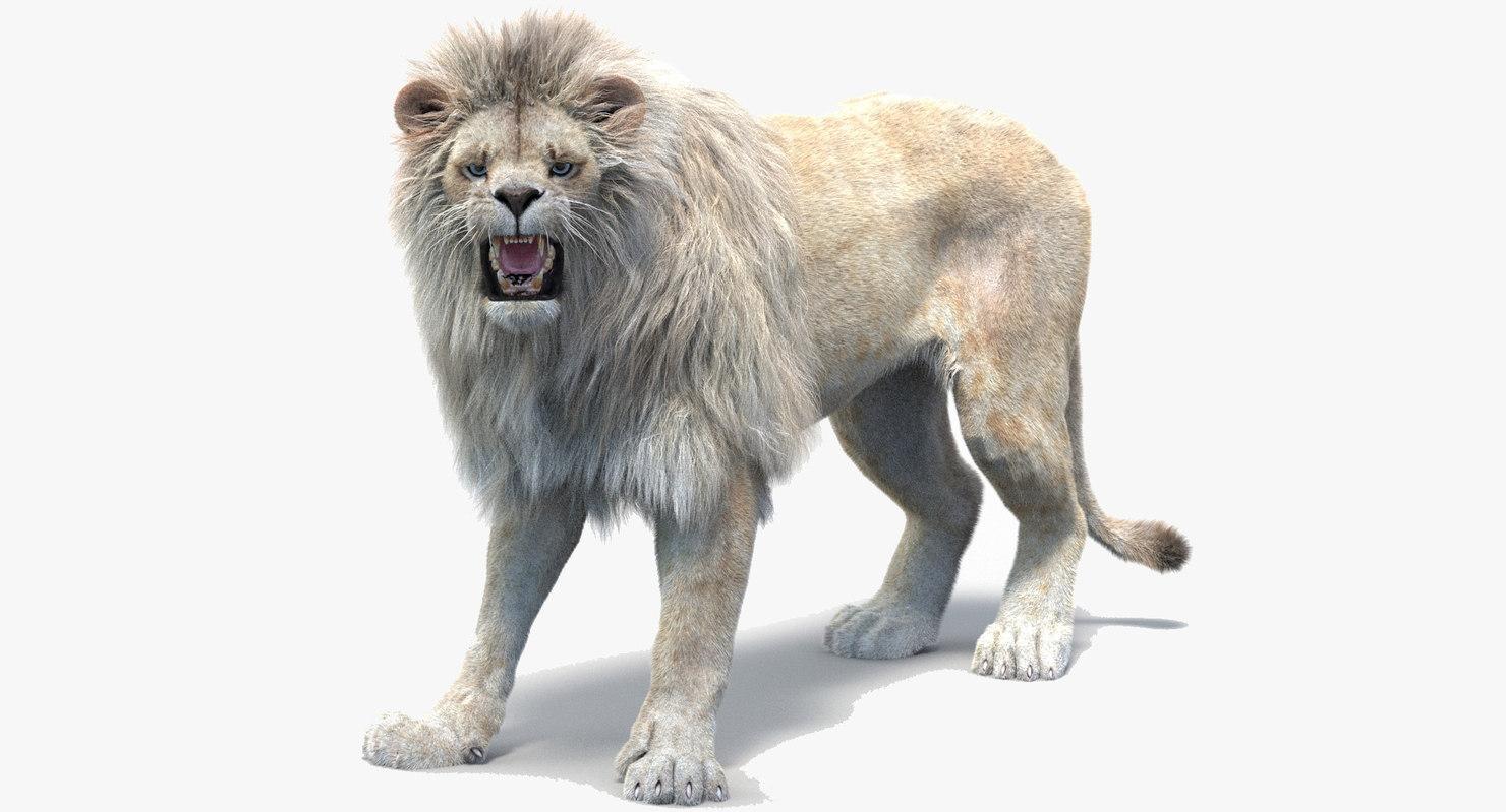 white lion 2 fur model