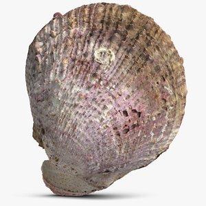 sea shell model