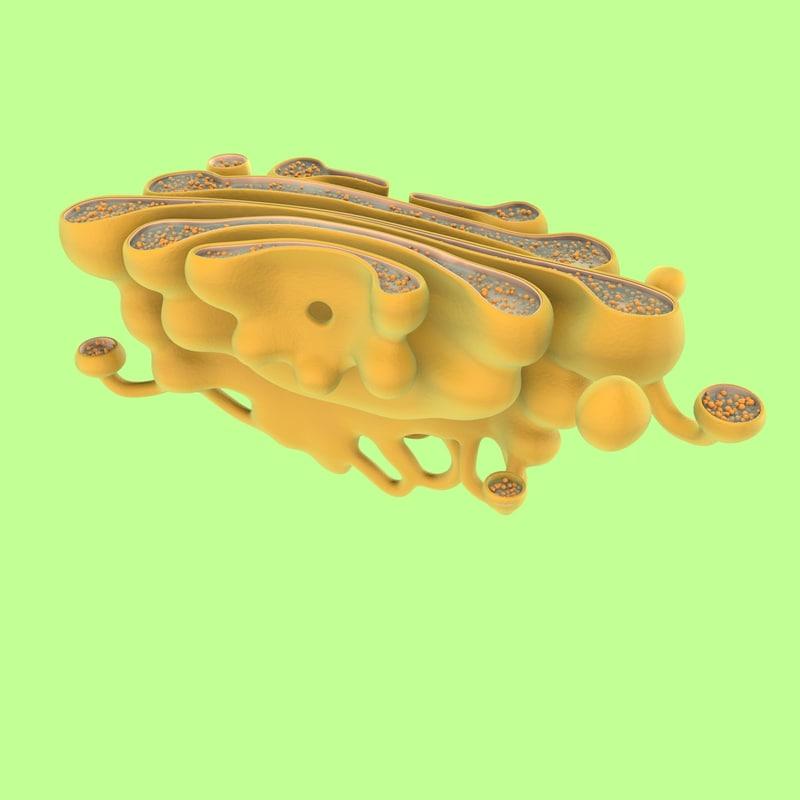 3D golgi apparatus