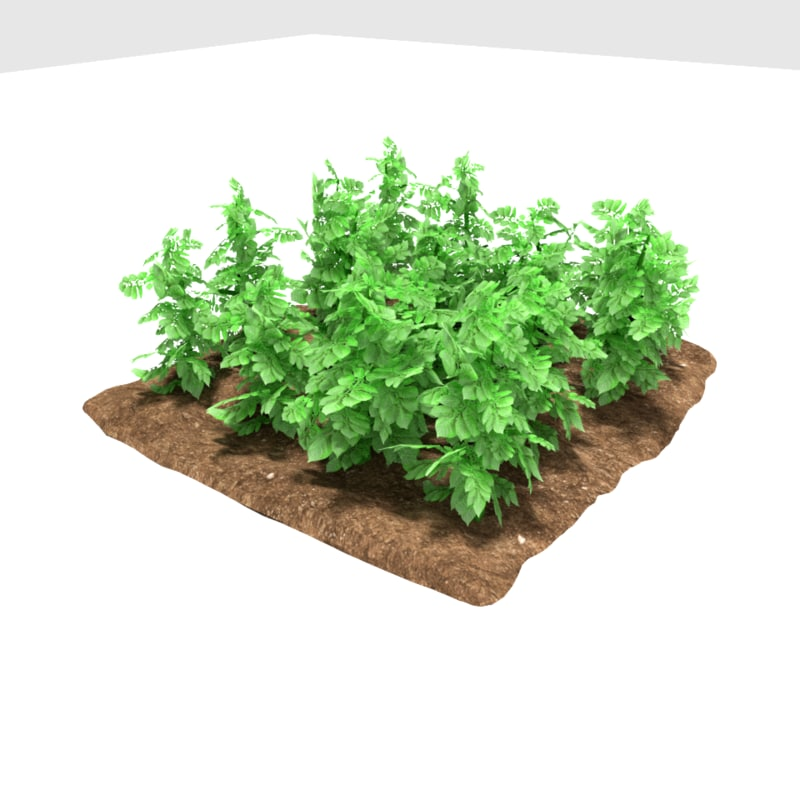 3D potatoes 3 growth stages