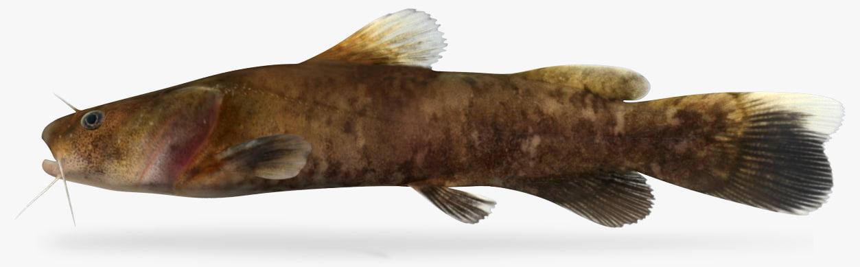 pylodictis olivaris flathead catfish 3D model