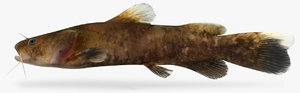 pylodictis olivaris flathead catfish 3D model
