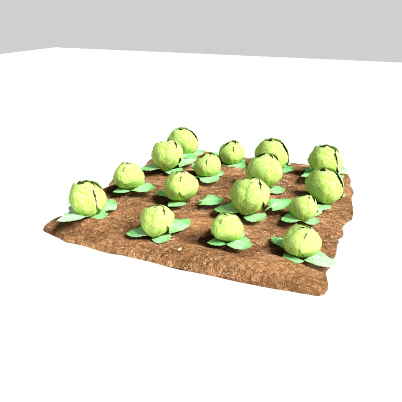 cabbage 3 growth stages 3D model