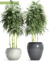 bamboo plant 96